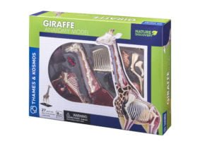 giraffe anatomy