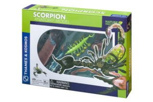 scorpion anatomy