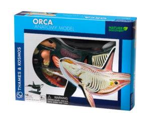 orca anatomy