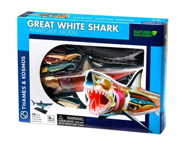 great white shark anatomy