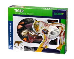 tiger anatomy