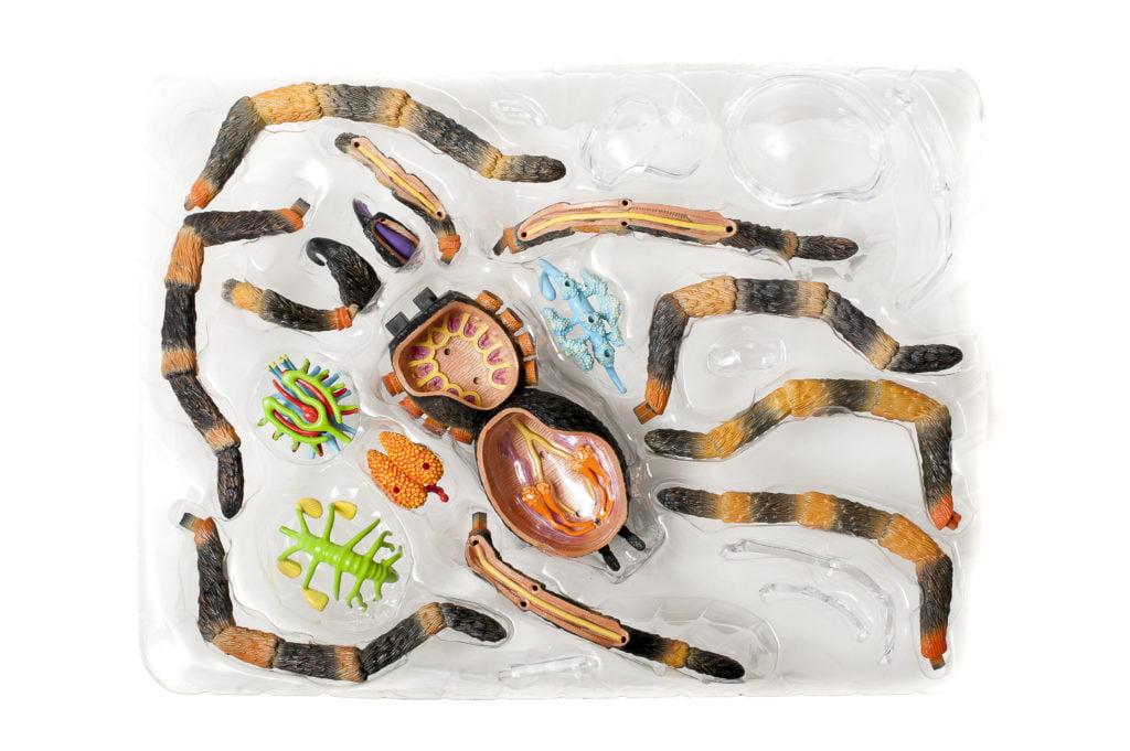 tarantula contents