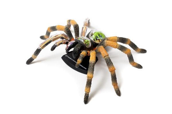 tarantula anatomy